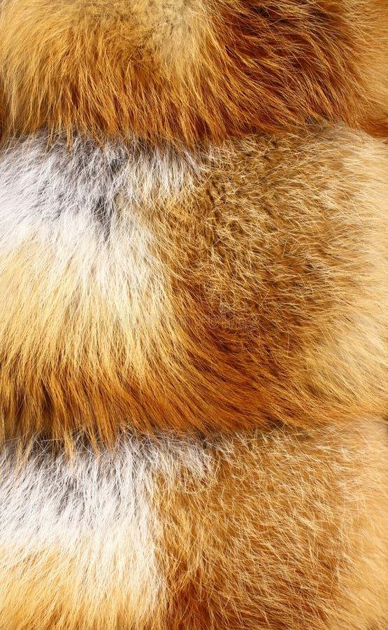 Piel de zorro rojo fotos de archivo libres de regalías