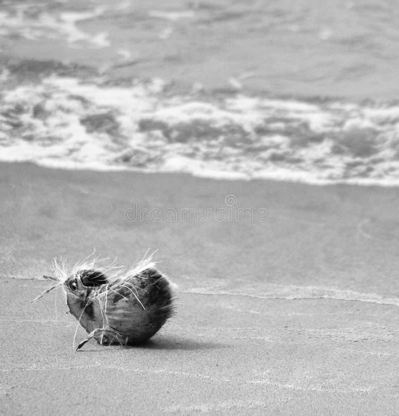 Piel del coco en la orilla de mar foto de archivo