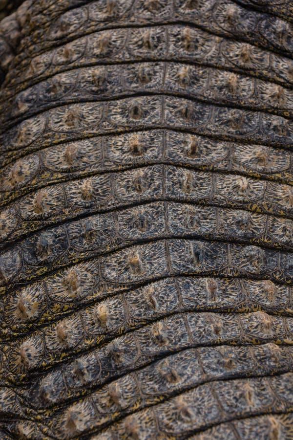 Piel del cocodrilo fotografía de archivo