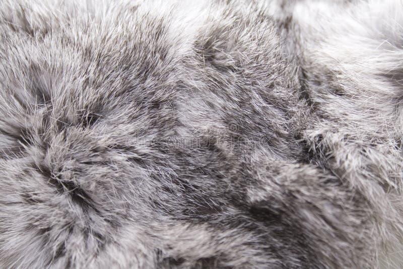 Piel del conejo foto de archivo libre de regalías