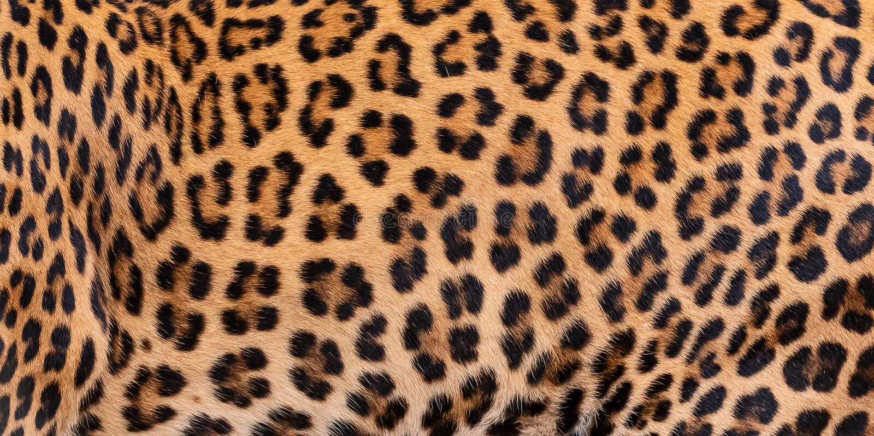 Piel del detalle del leopardo fotografía de archivo