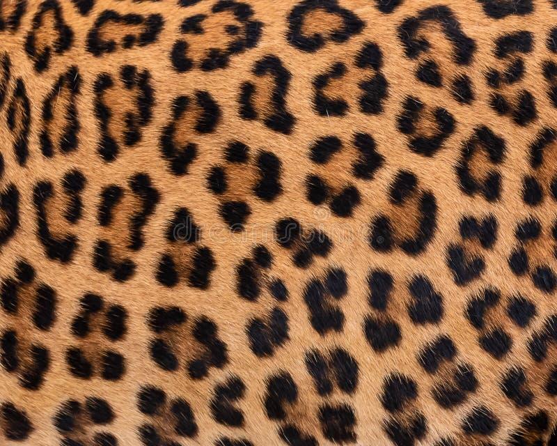 Piel del detalle del leopardo imágenes de archivo libres de regalías