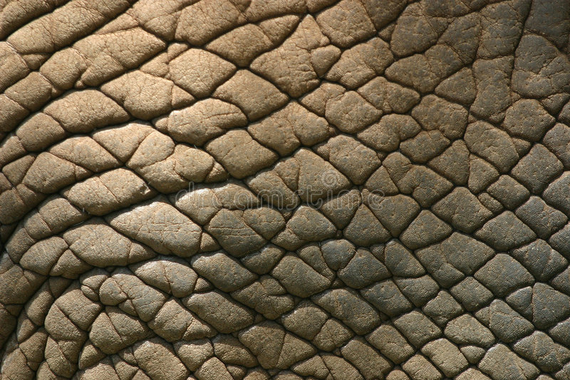 Piel del elefante fotografía de archivo