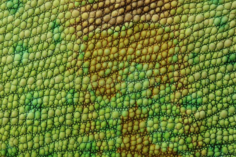 Piel del lagarto fotos de archivo