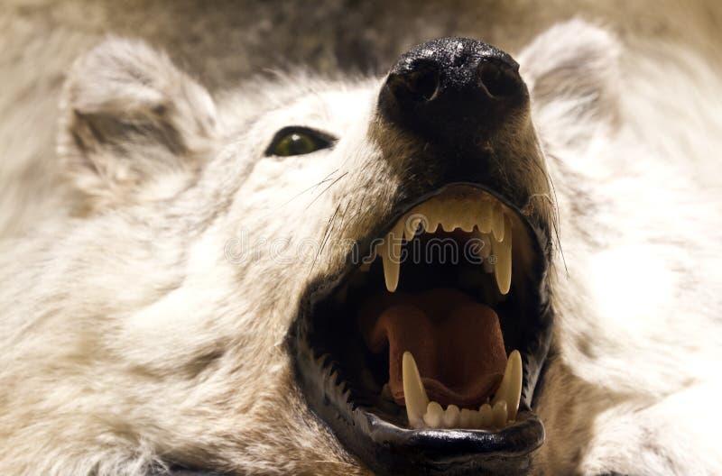 Piel del lobo fotografía de archivo