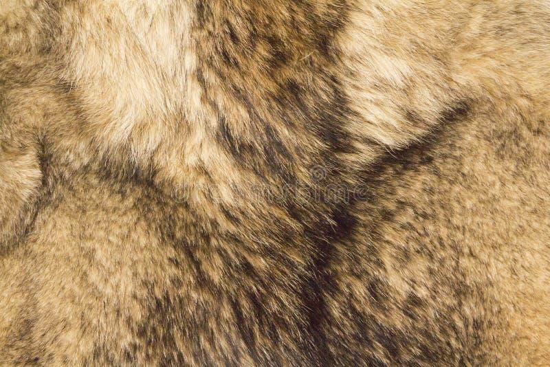 Piel del lobo imágenes de archivo libres de regalías