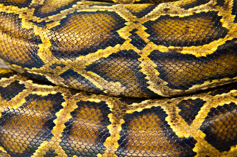 Piel del modelo de la serpiente. fotografía de archivo