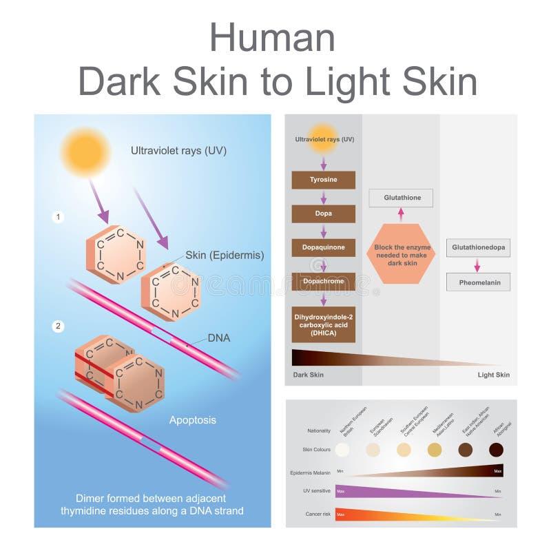 Piel oscura humana para encender proceso de la piel stock de ilustración