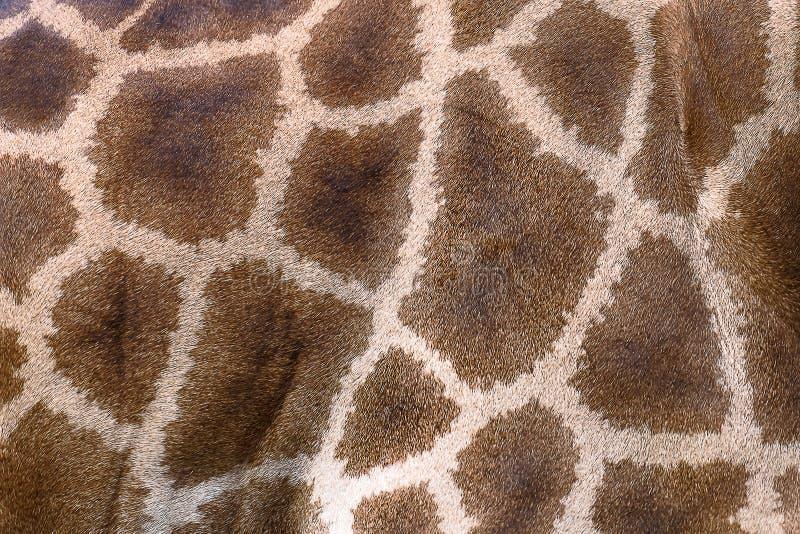 Piel texturizada de la jirafa imágenes de archivo libres de regalías