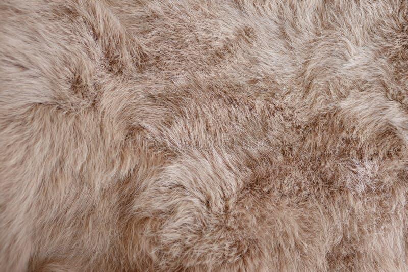 Pieles de conejo marrón Textura, fondo de piel animal imágenes de archivo libres de regalías