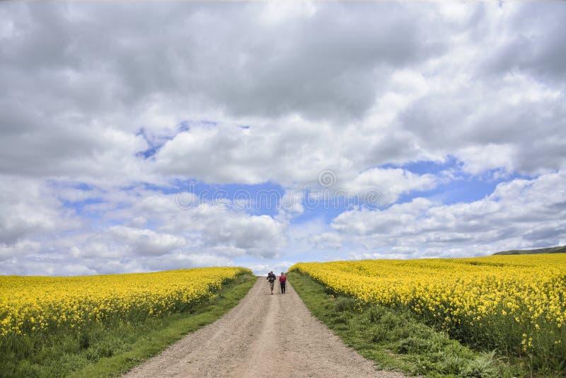 Pielgrzymi na drodze między rapeseed polami zdjęcie royalty free