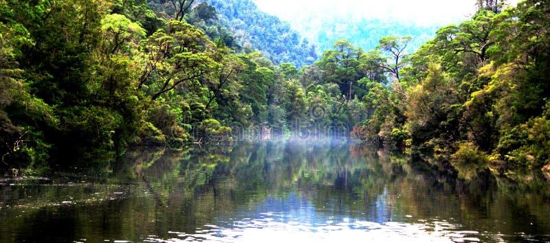 Pieman flod Tasmanien arkivfoto