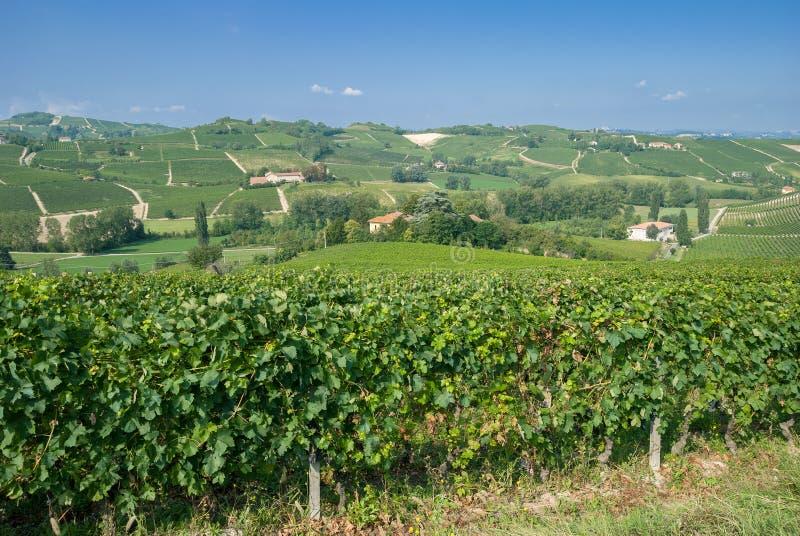 Piemonte dichtbij Asti, Italië royalty-vrije stock afbeelding