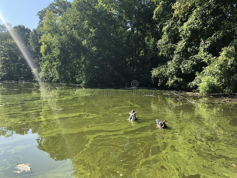 Piemonte-Park, Clara Meer Lake, Atlanta royalty-vrije stock afbeelding