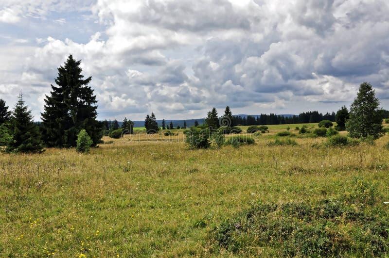 A piena vista delle erbacce e degli alberi nella terra fotografia stock