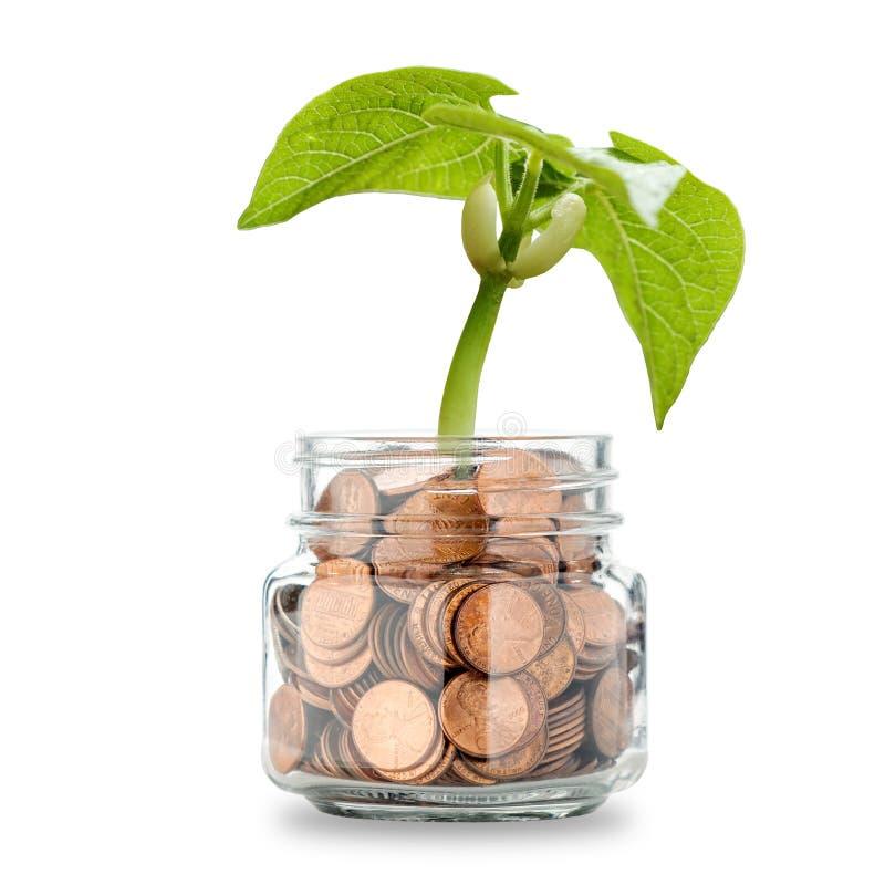 Pieniądze drzewo - R Twój bogactwo obraz stock