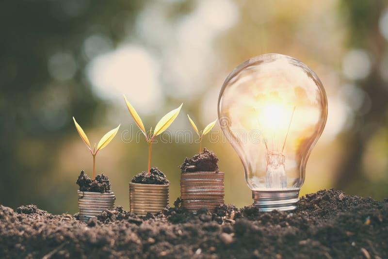pieniądze growht mały drzewo z żarówką na ziemi pojęcia oszczędzania energia zdjęcie royalty free