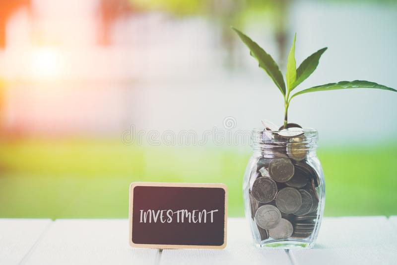 Pieniądze inwestyci i oszczędzania pieniężny pojęcie Rośliny dorośnięcie w savings monetach z tekst inwestycją na małym billboard obrazy stock