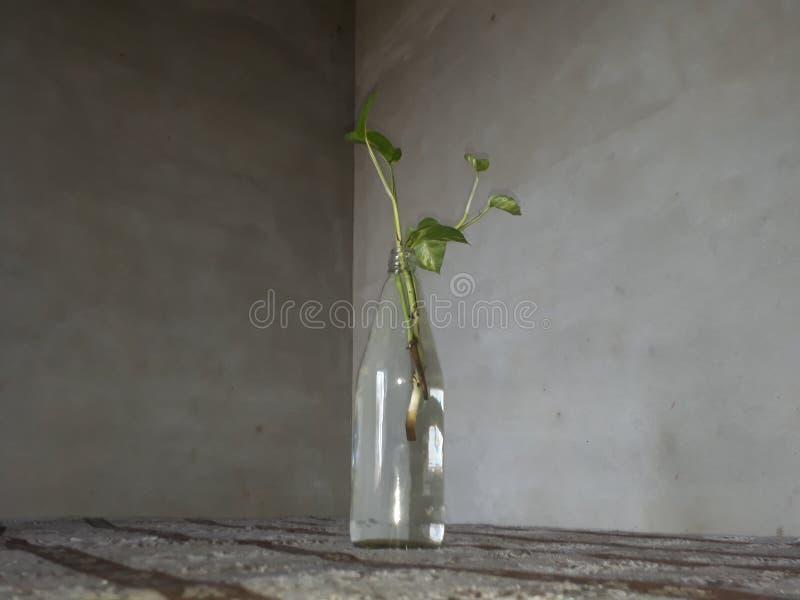 Pieniądze roślina r w wodzie obrazy royalty free