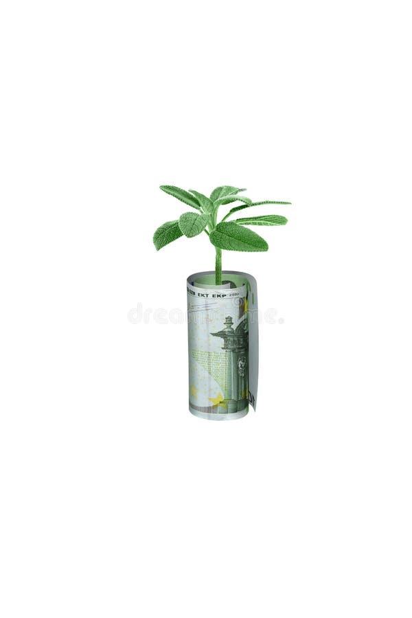 pieniądze rośliny rolka fotografia stock