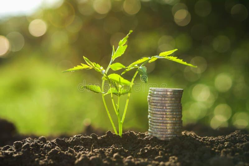 pieniądze sterta z małym drzewem i zmierzchem w naturze zdjęcia royalty free