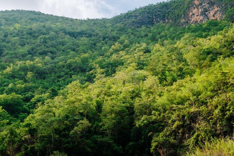 In pieno dell'albero sulla montagna fotografia stock libera da diritti