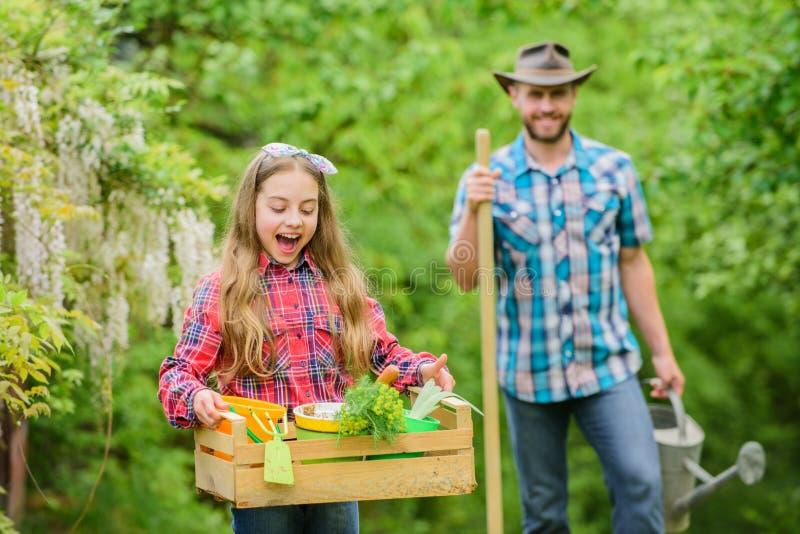 Piense el verde Jardinero en el trabajo ecolog?a Herramientas que cultivan un huerto nuevas, bandeja del bast?n pa?s del pueblo d foto de archivo