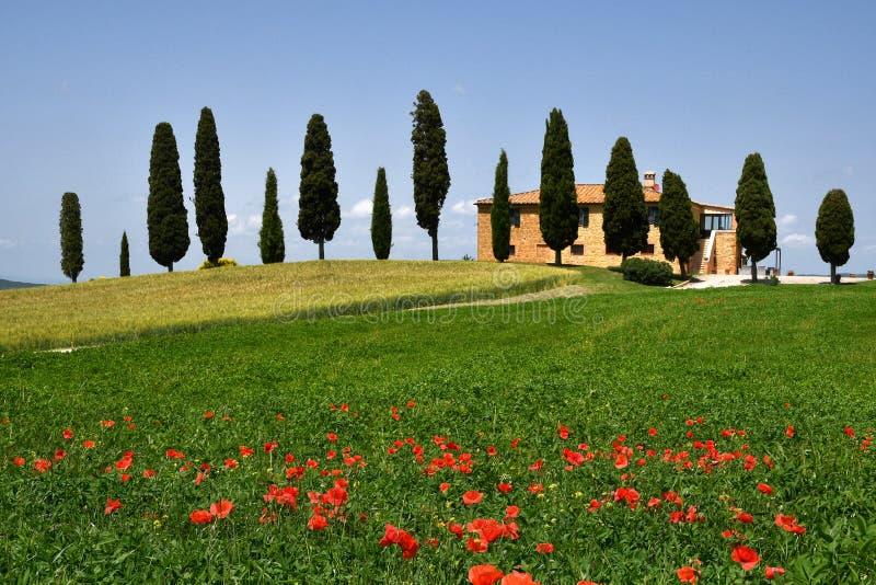 Pienza, Тоскана - июнь 2019: Красивый ландшафт Тосканы, сельскохозяйственные угодья I Cipressini Итальянские кипарисы и красные м стоковые фото
