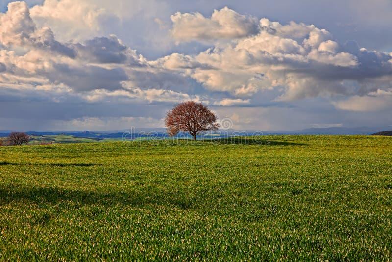 Pienza, Siena, Toscanië, Italië: landschap van de heuvels van Val D 'Orcia stock afbeeldingen