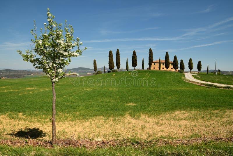 PIENZA TUSCANY/ITALIEN - MARS 31, 2017: tuscany landskap, jordbruksmark I Cipressini, träd för italiensk cypress med den lantliga royaltyfria foton