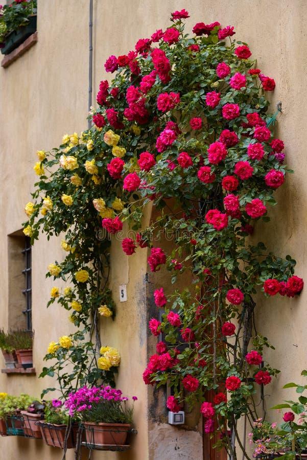 PIENZA, TUSCANY/ITALY - 18 MAGGIO: Rose intorno alla porta di un puntello immagine stock