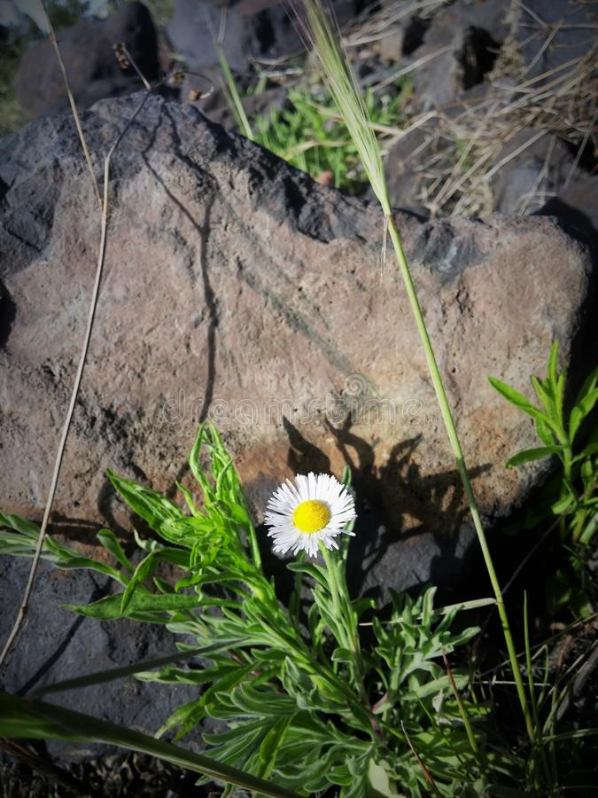 Piepende bloemen stock foto