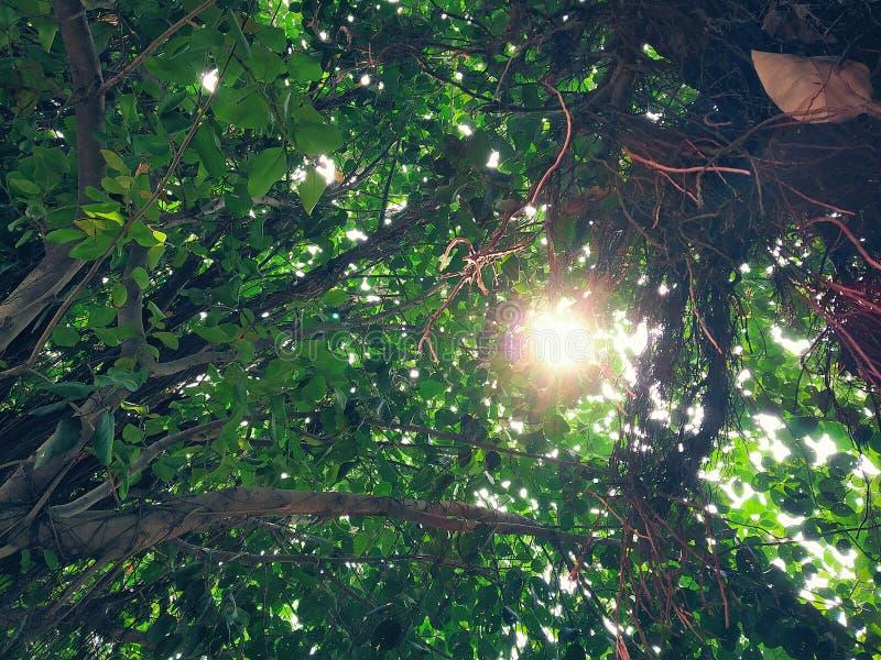 Piepende zon door de takken stock afbeelding