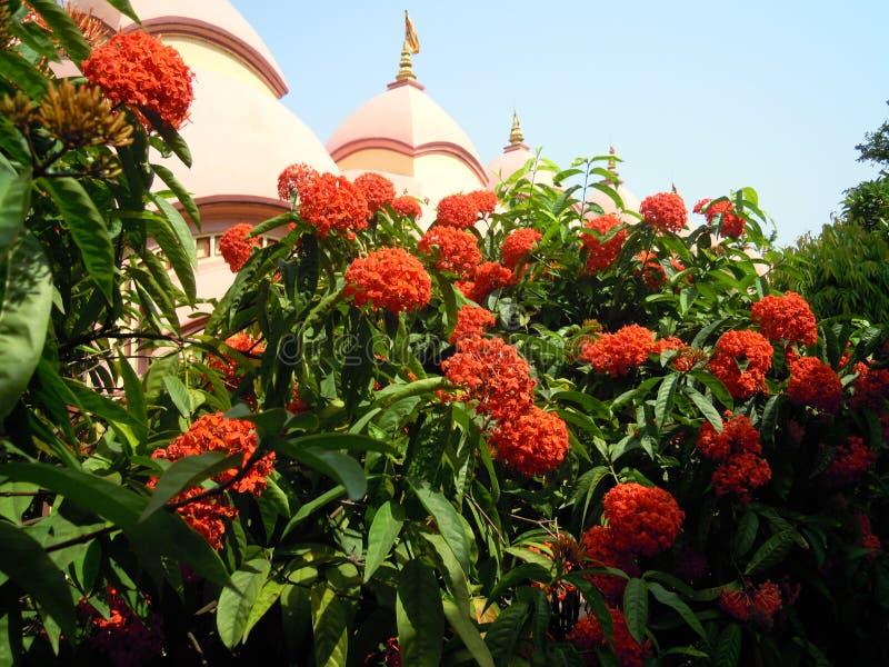 Piepgeluid van Tempelhoofd door bloemen en bomen stock foto