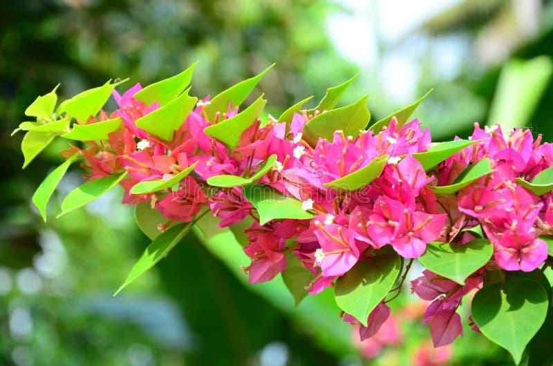 Pieprzowy kwiat zdjęcia stock