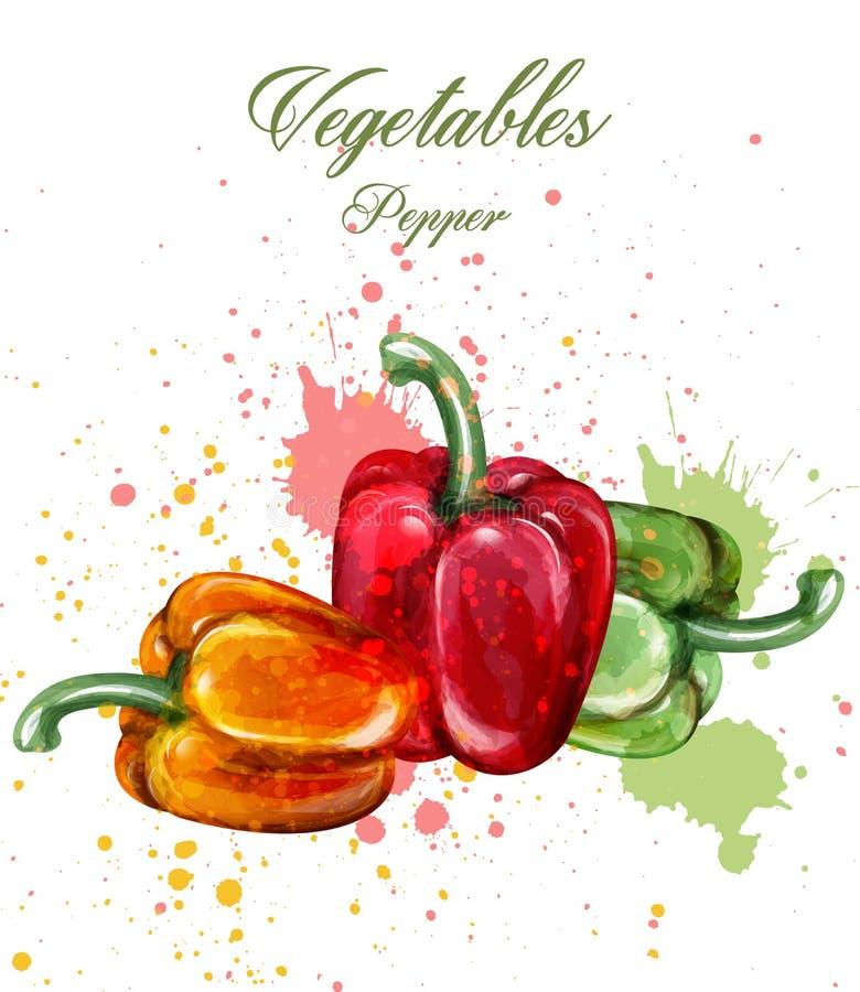 Pieprzy akwarela wektor Soczyste kolorowe warzywo ilustracje ilustracji