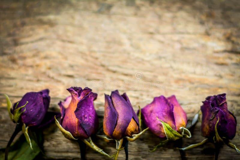 Pierścionek i Rozmyte Suche róże na drewnianej teksturze, Sucha miłość w valentine, wybrana ostrość obrazy royalty free
