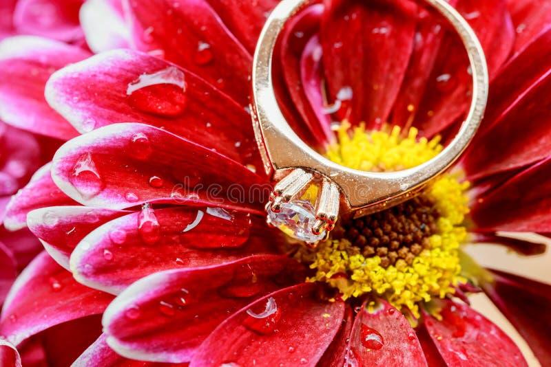 pierścionki różowią dalii miłości Valentine& x27; s dzień Zabarwiający i łagodzący - diamentowy ślub obraz royalty free