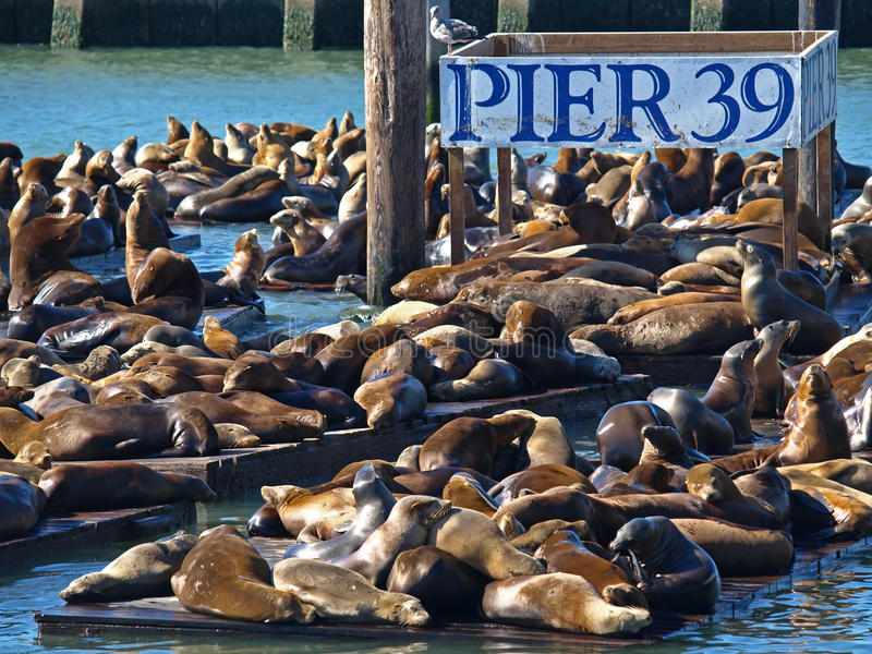 Download PIER 39 & Sea Lion Royalty Free Stock Photo - Image: 11145985