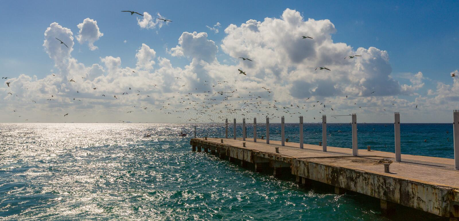 Pier and a flock of birds royalty free stock photography