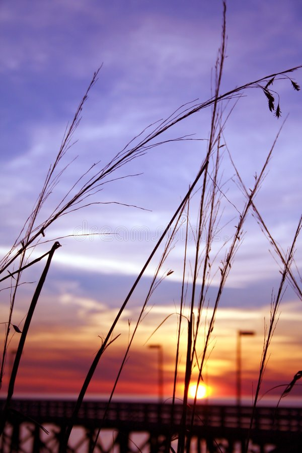 Download Pier Grass stock photo. Image of coast, beach, evening - 413952