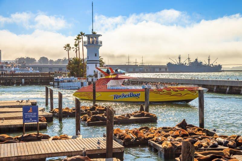 Pier 39 Sea lions colony royalty free stock photos