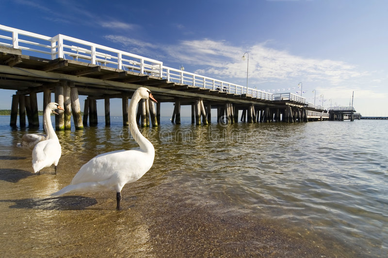 The pier in Sopot with swan stock images