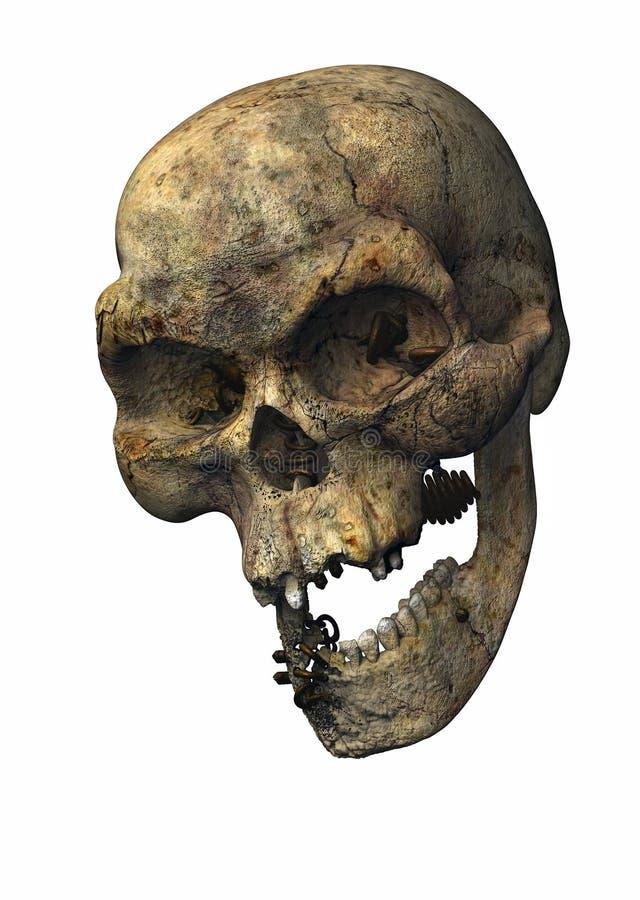 Pierced skull stock images