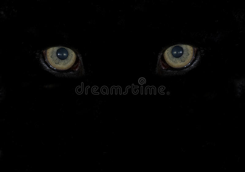 Piercing animal eyes in the pitch dark stock images