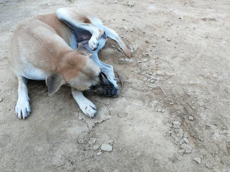 Pierna limpia del perro en la tierra del suelo foto de archivo