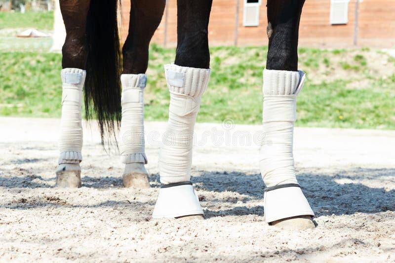 Piernas del caballo en los vendajes protectores que se colocan en la arena ecuestre s foto de archivo