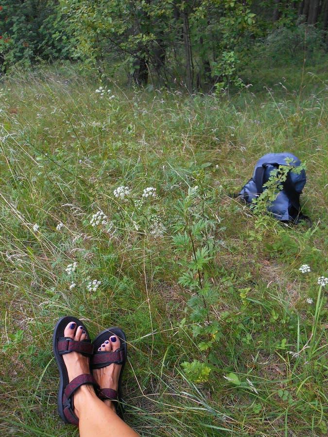 Piernas femeninas en el viaje verde del bosque fotos de archivo