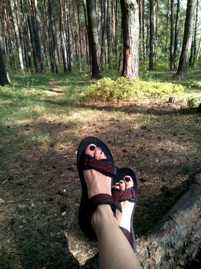 Piernas femeninas que descansan en bosque imagen de archivo libre de regalías