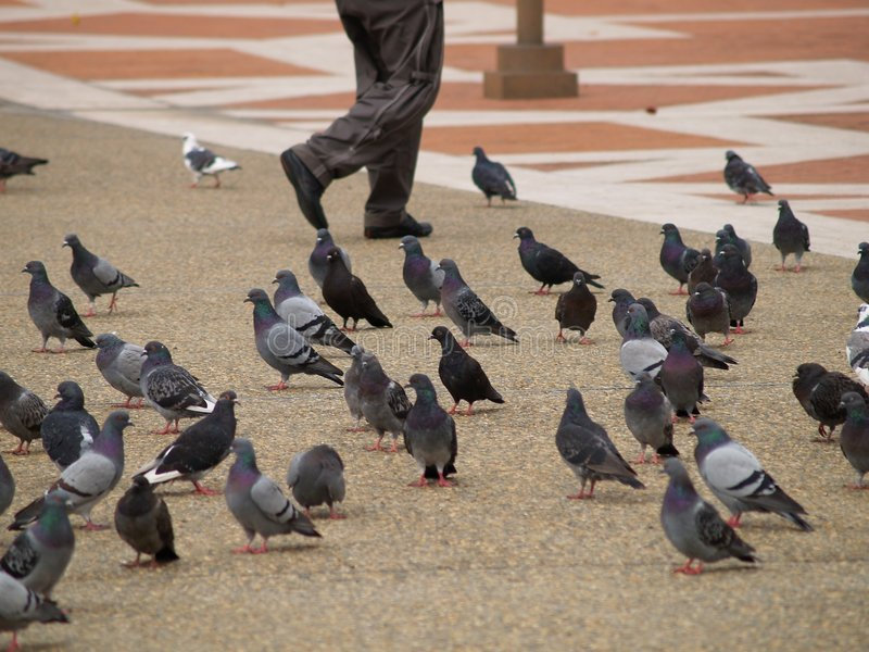 Piernas que recorren a través de palomas foto de archivo